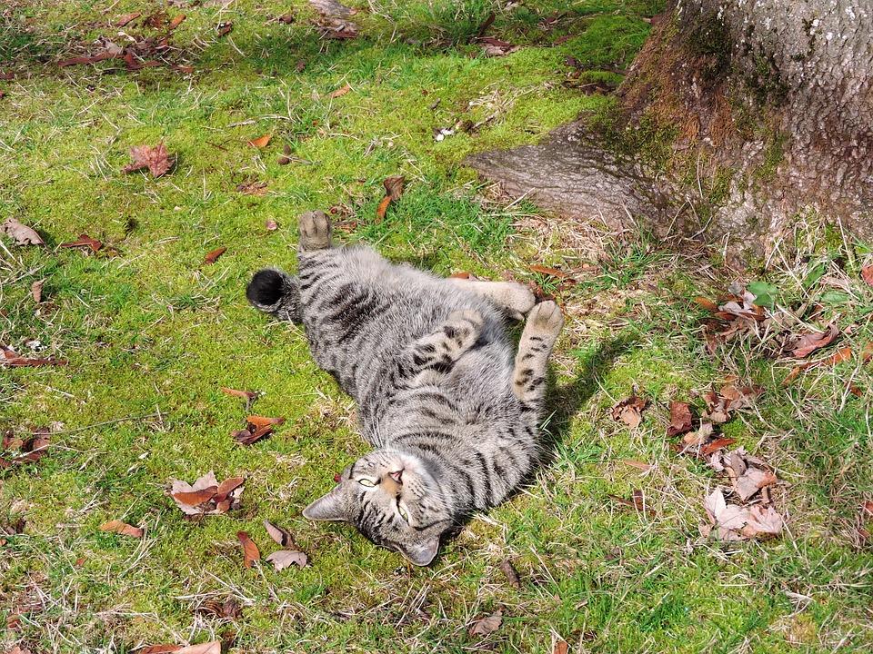 Cat, Grass, Rolling, Sun, Outside, Feline, Nature