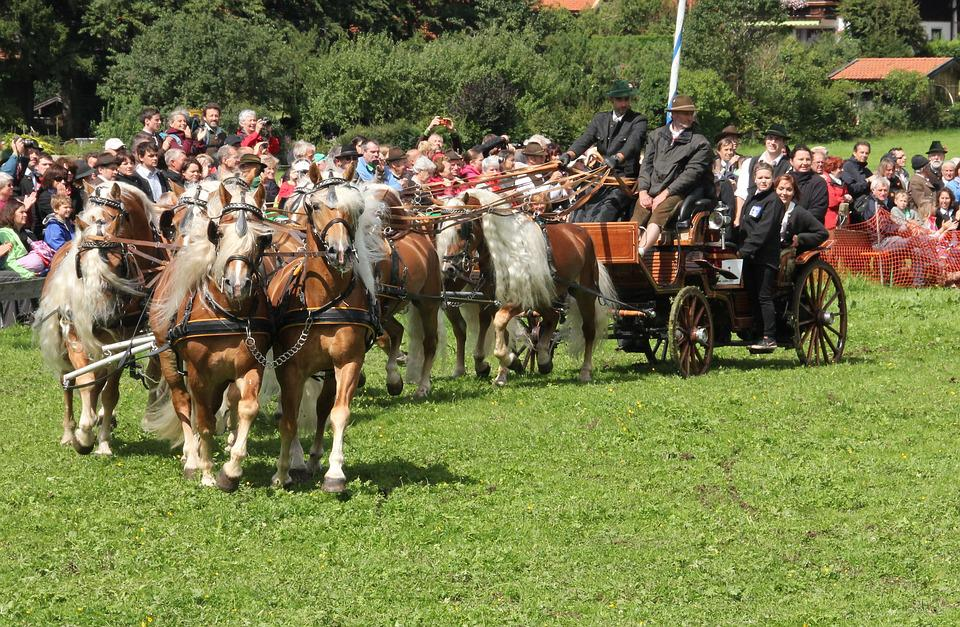Cavalry, Human, Mammal, Competition, Grass, Reiter