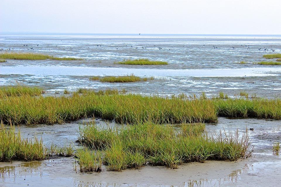 Wadden Sea, North Sea, Coast, Beach, Grass
