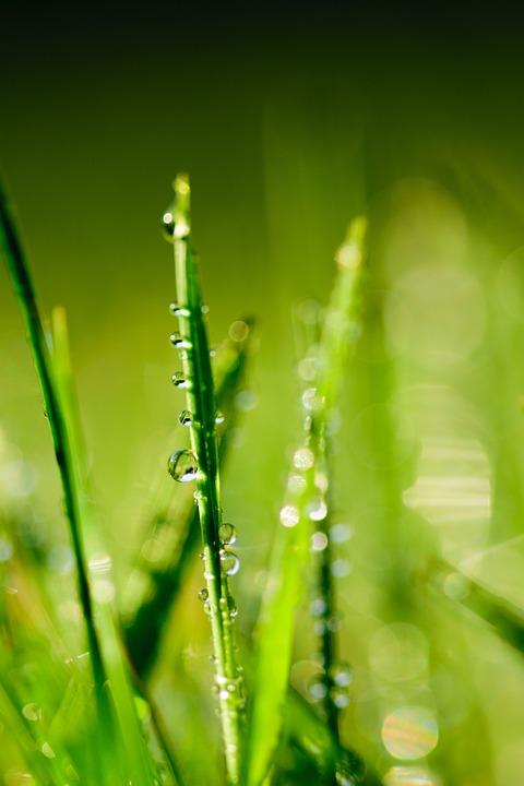 Water, Green, Leaf, Dew, Drop, Grass, Nature, Drops