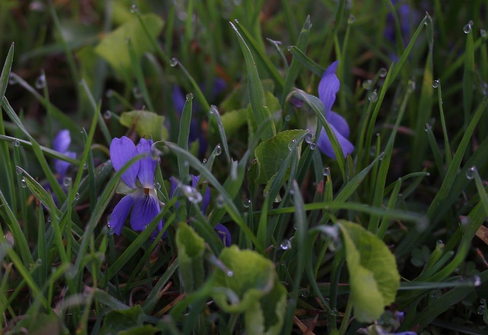 Micsunele, Blue, Dew, Grass, Morning, Green, Supplies