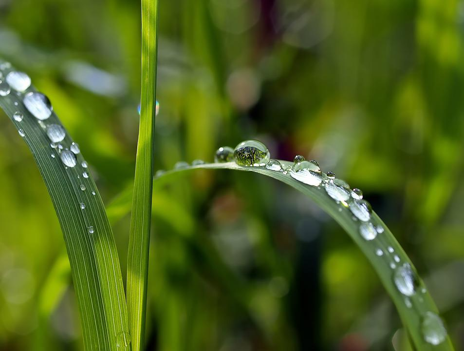 Drip, Grass, Raindrops, Water Droplets, Green, Dewdrops