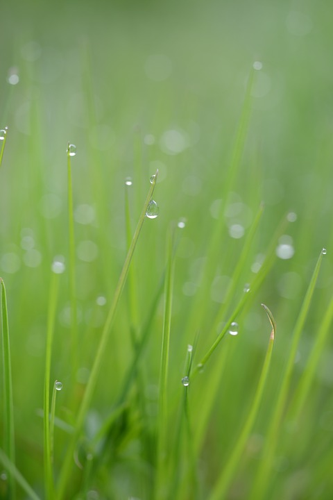 Grass, Blade Of Grass, Drop Of Water, Nature, Grasses