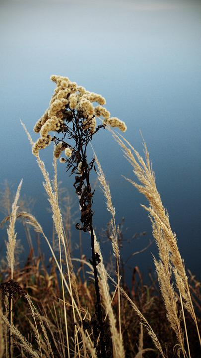 The Background, Wallpaper, Plant, Autumn, Dry, Grass