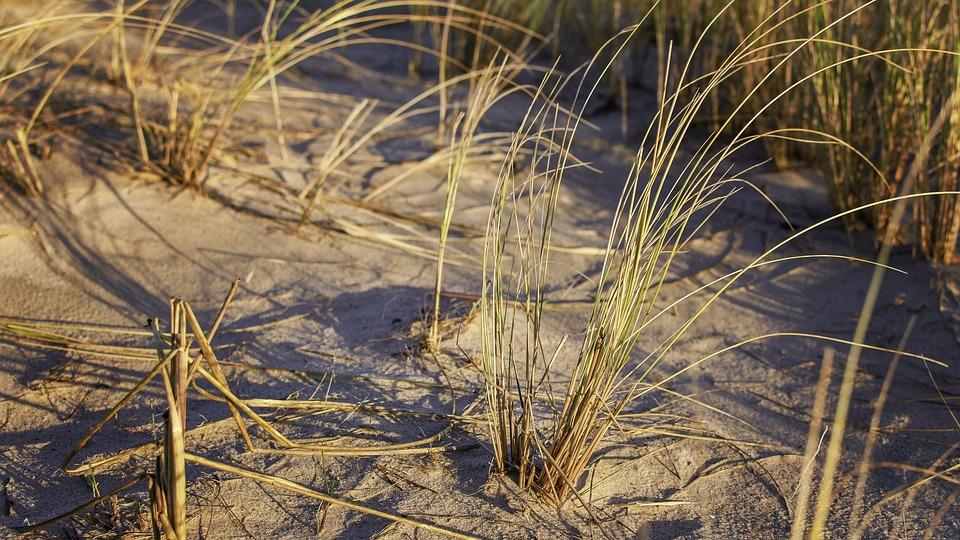 Grass, Beach, Herbs, Landscape, Nature, Coast, Dunes