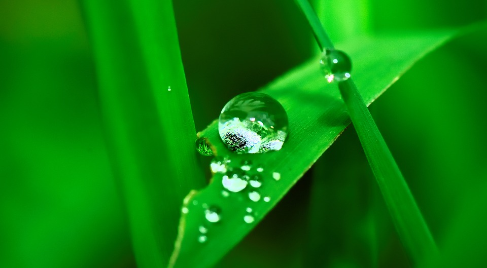 Water, Drop, Grass, Rain, Nature, Wet, Fall, Plant