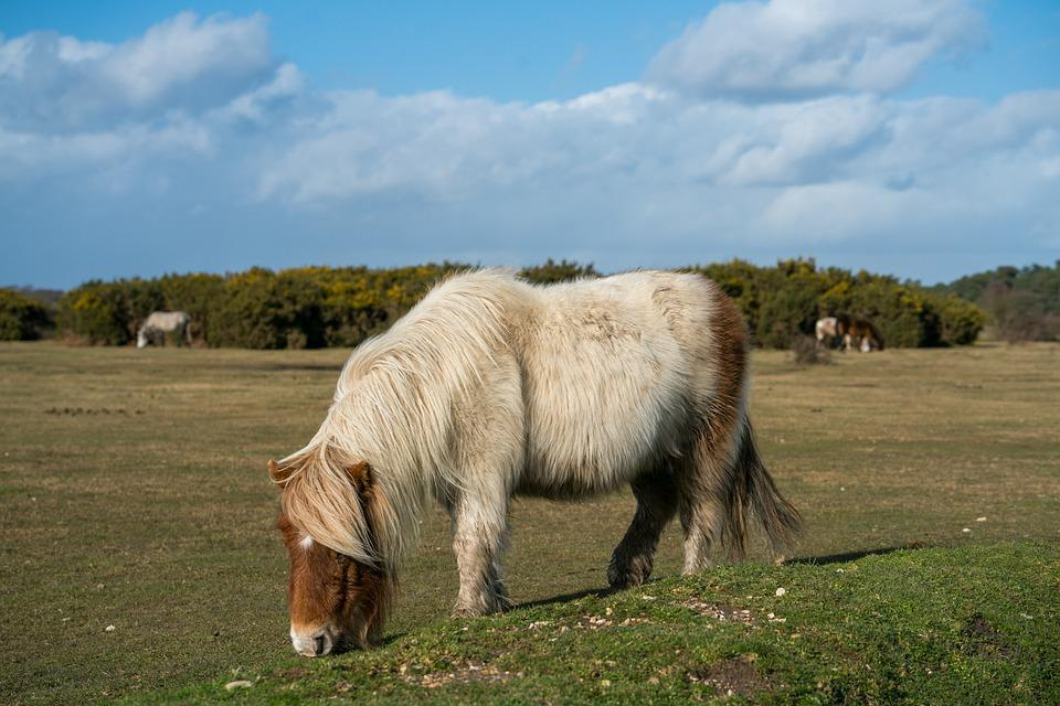Grass, Farm, Mammal, Field, Pasture, Horse, Pony