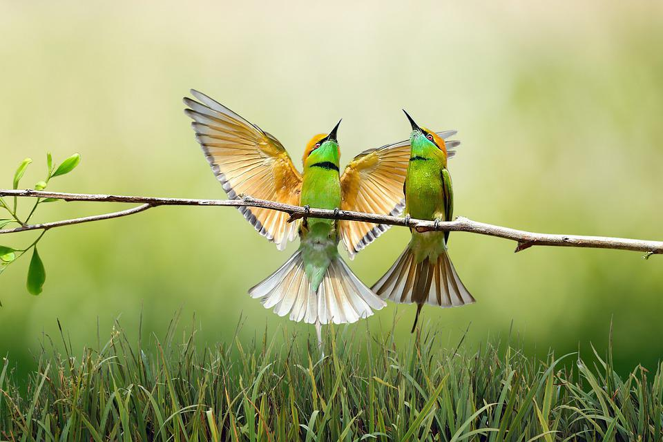 Birds, Branch, Grass, Feathers, Plumage, Green, Couple