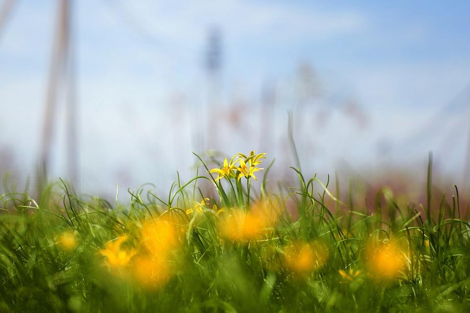 Grass, Nature, Field, Haymaking, Summer, Flower