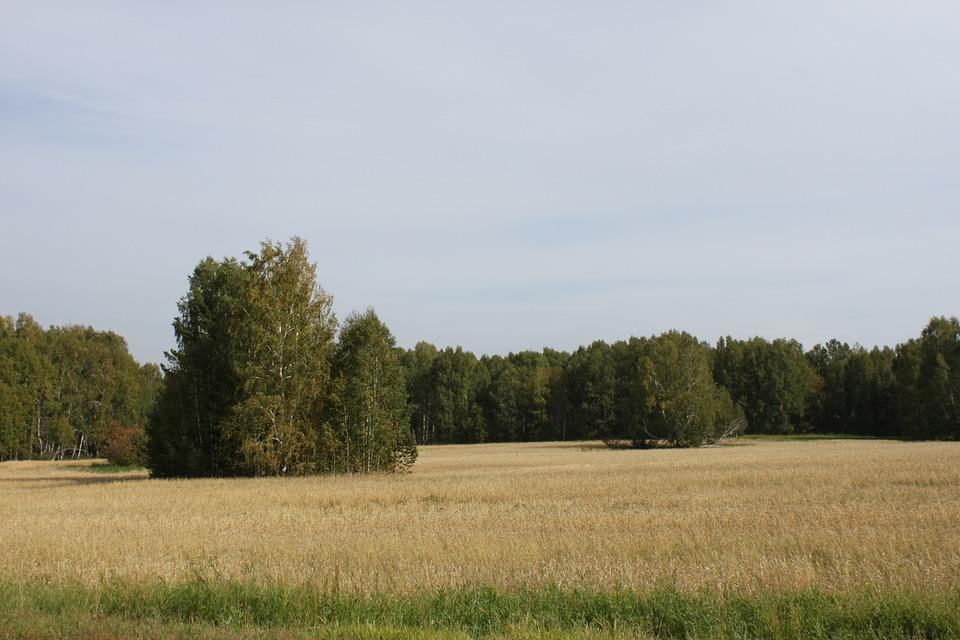 Field, Forest, Grass