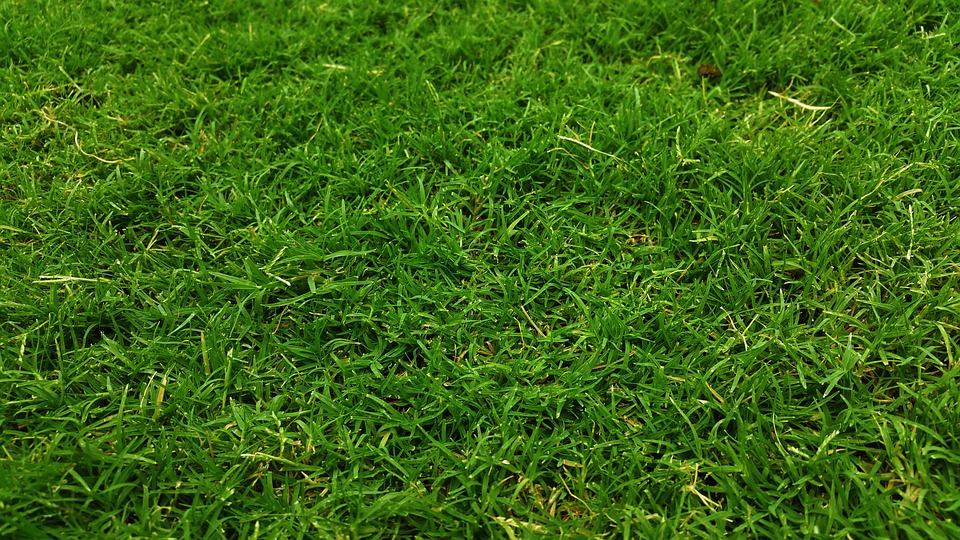 Dark Green, Golf Green, Grass, Grass Field, Grass Land