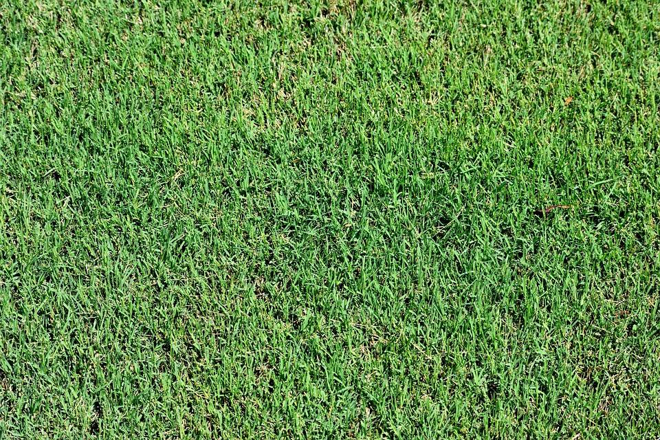Lawn, Grass, Green, Nature, Spring, Summer, Field