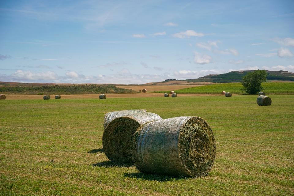 Palencia, Mowing, Field, Grass