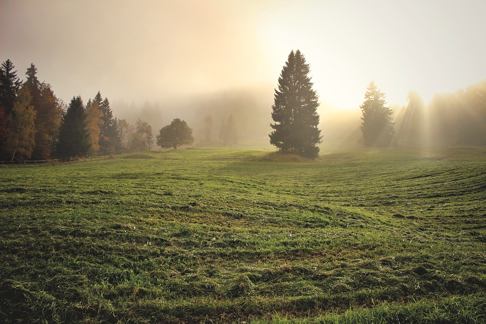 Grass, Trees, Fields, Meadows, Sunlight, Fog, Sunrise