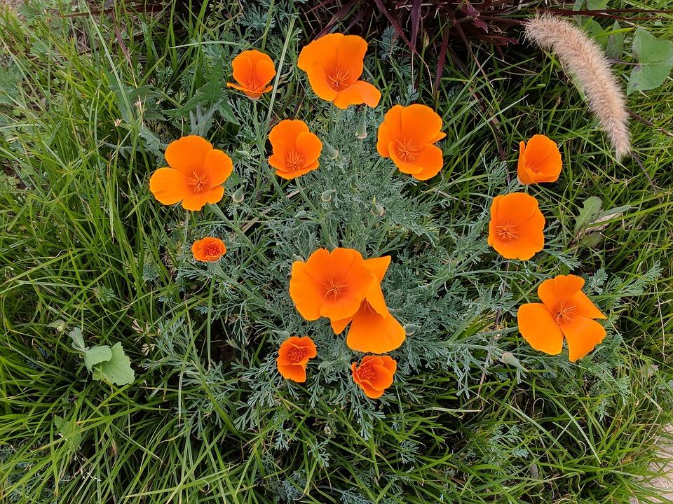 Flower, Flora, Grass, Nature, Field