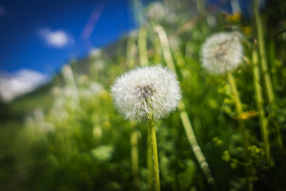Flower, Meadow, Nature, Flowers, Bloom, Flora, Grass