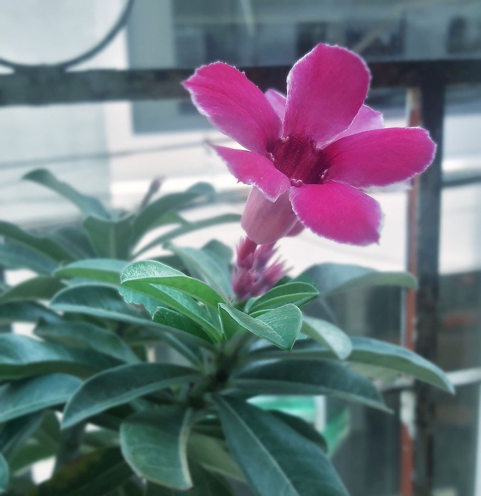 Porcelain Flower, Grass Flower, Natural