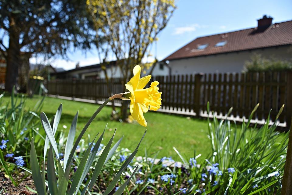 Grass, Nature, Flower, Plant
