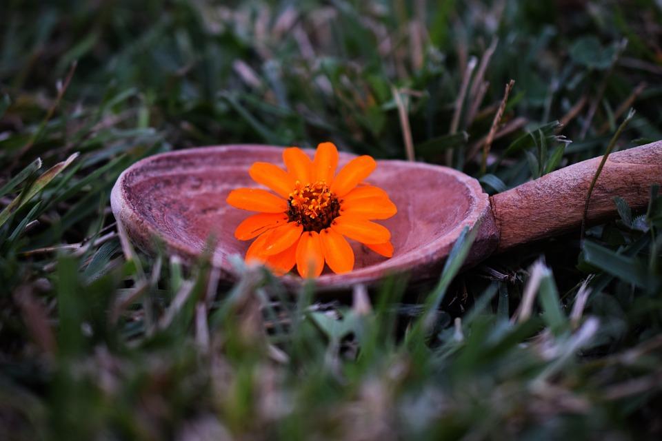 Autumn, Flower, Grass, Garden, Tree, Closeup