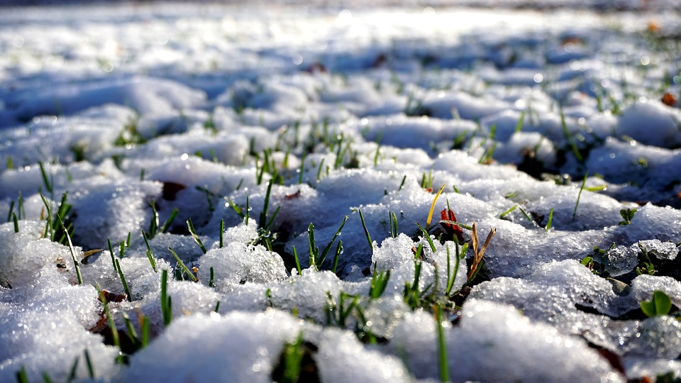 Snow, Grass, Fluffy, Cold, Nature, White, Time Of Year