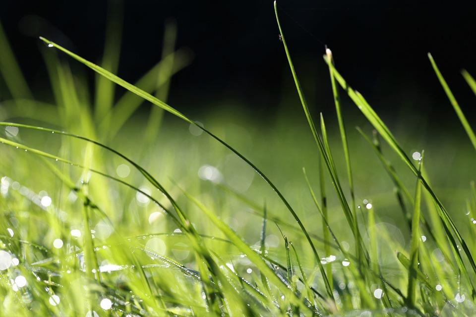 Grass, Dewdrop, Nature, Meadow, Flora, Dew, Freshness