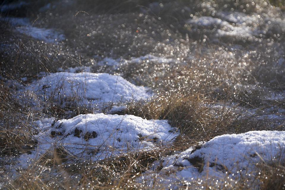 Grass, Nature, Ice, Winter, Cold, Frosty, Snow