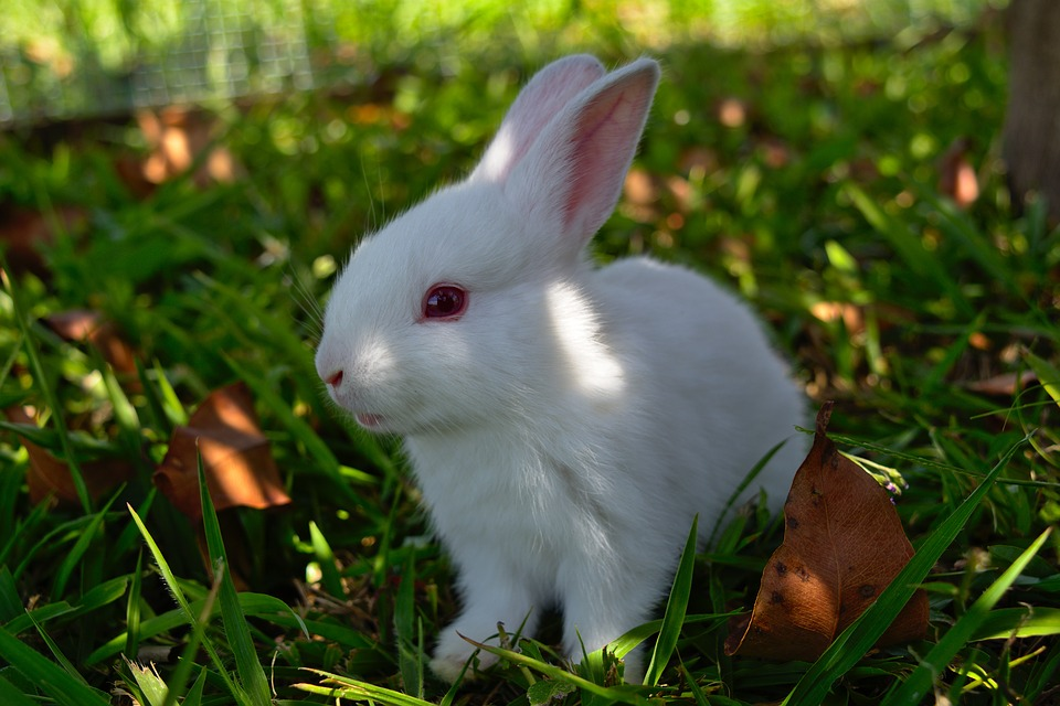 Free Photo Grass Furry Bunny Cute Animal Rabbit Easter