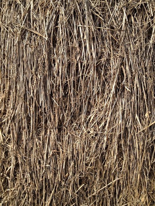 Straw, Grain, Grass