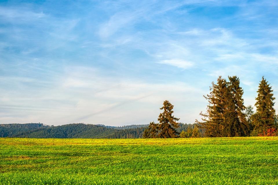 Meadow, Field, Grass, Prairie, Grasslands, Grassfields