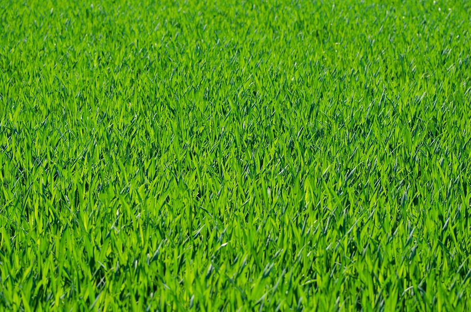Grass, Grassy, Stalks, Green, Background, Wallpaper