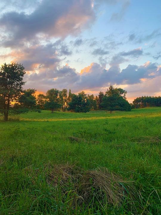 Landscape, Meadow, Field, Grass, Summer, Green, Mood