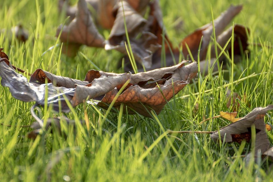 Holidays, Grass, Green, Nature, Meadow