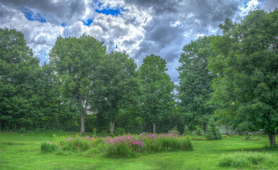 Garden, Landscape, Summer, Nature, Green, Grass, Park