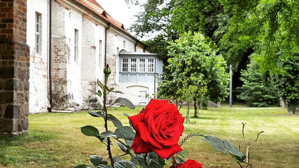 Garden, Summer, Nature, Flower, Plant, Grass, Home