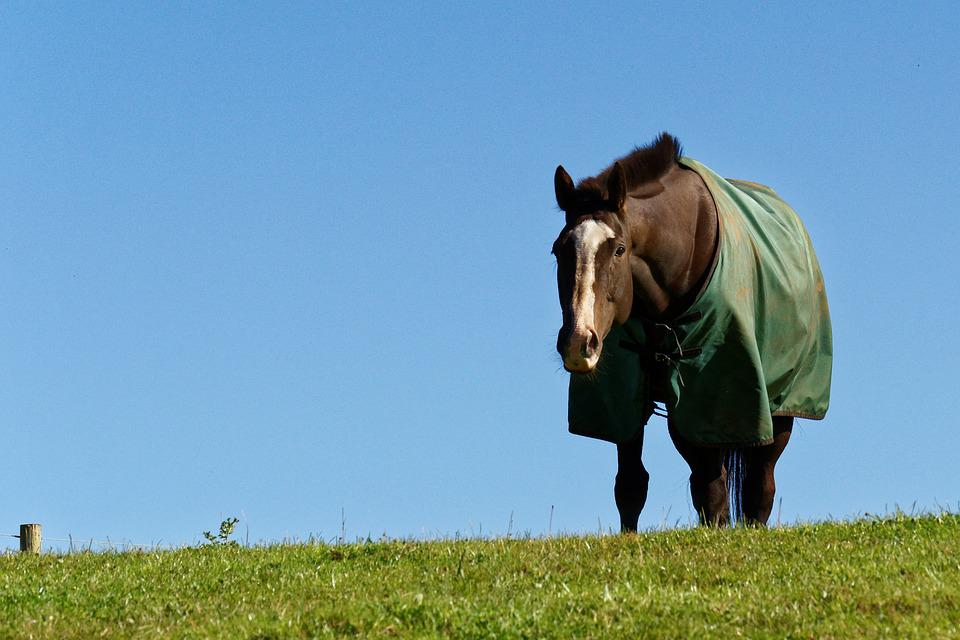 Horse, Animal, Grass, Horse Blanket, Blue Sky