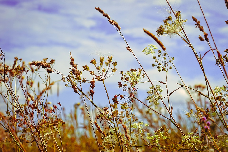 Herbs, Summer, Grass, Nature, In The Summer Of, Meadow