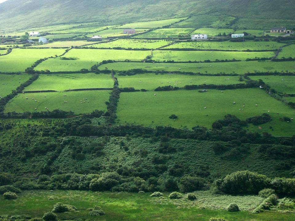 Ireland, Meadow, Green, Grass, Nature, Irish