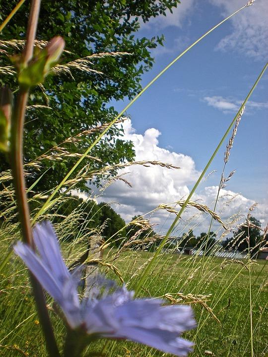 Bed, Flower, Grass, Järna