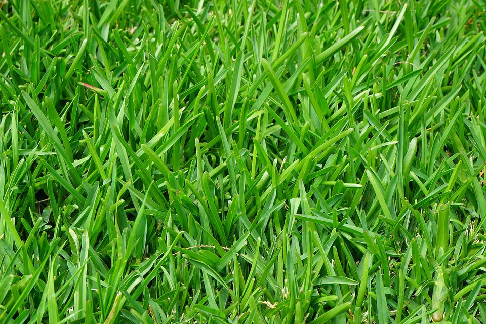 Grass, Rush, Juicy, Green, Blades Of Grass, Halme
