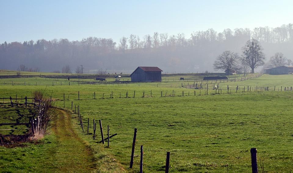 Grass, Nature, Agriculture, Field, Farm, Landscape