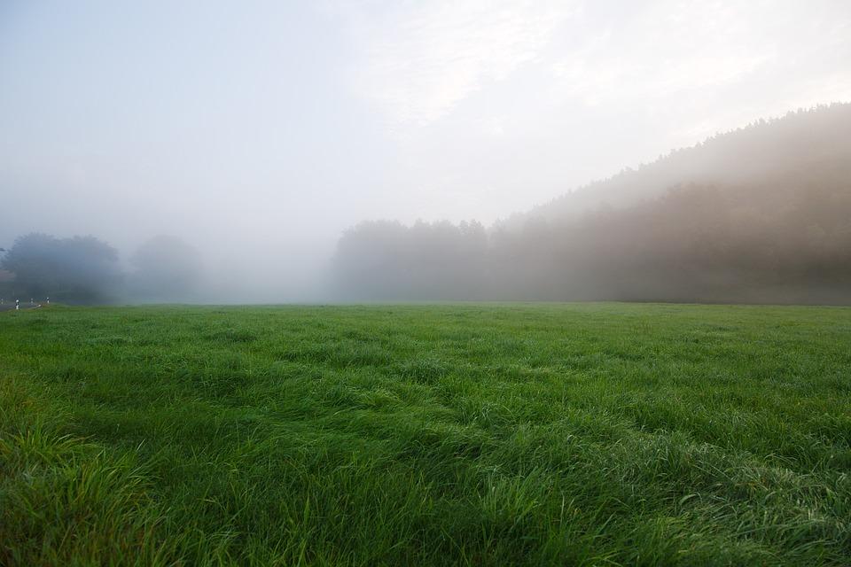 Grass, Field, Landscape, Nature, Land, Agriculture