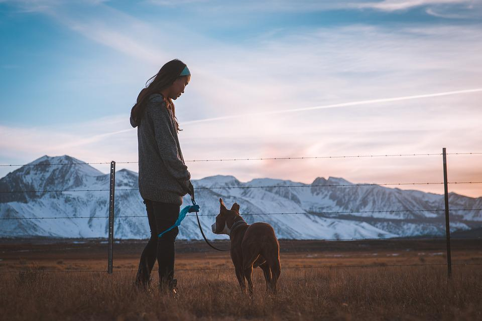 Dog, Fence, Field, Girl, Grass, Landscape, Mountain