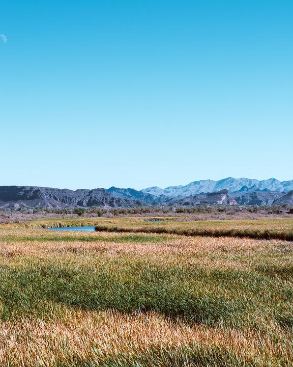 Marsh, Grass, Swamp, Nature, Wetland, Landscape, Reed