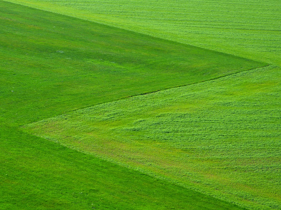 Meadow, Green, Grass, Landscape, Square, Symmetrical