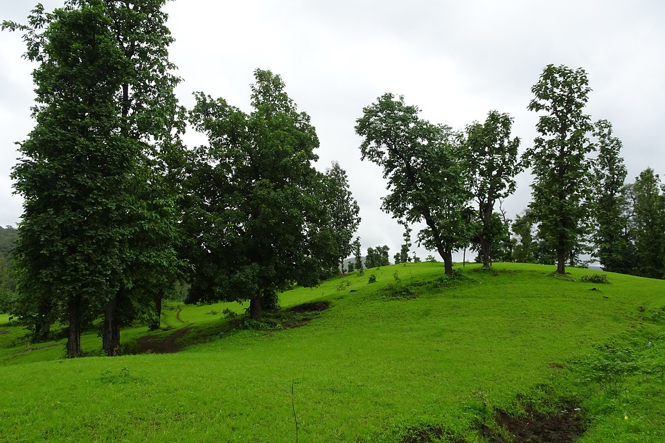 Landscape, Nature, Green, Forest, Hills, Rainy, Grass