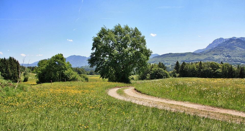 Nature, Landscape, Tree, Grass, Summer, Panorama, Sky