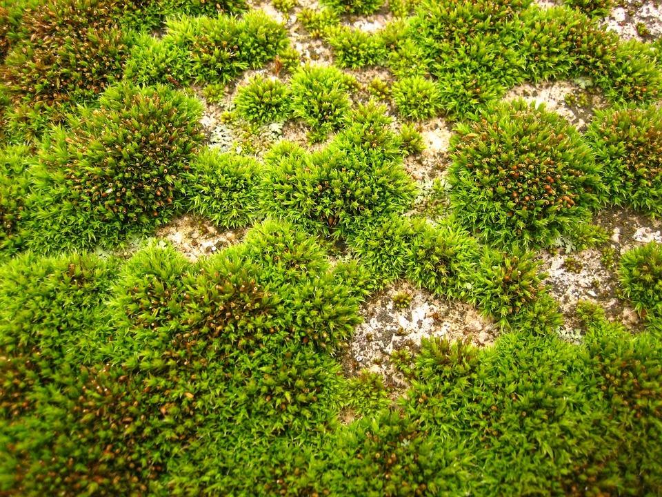 Field, Green, Moss, Grass, Landscapes, Nature