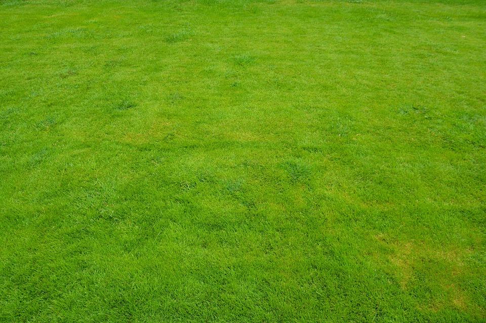 Lawn, Grass, Green, Summer, Garden, Nature, Landscaping