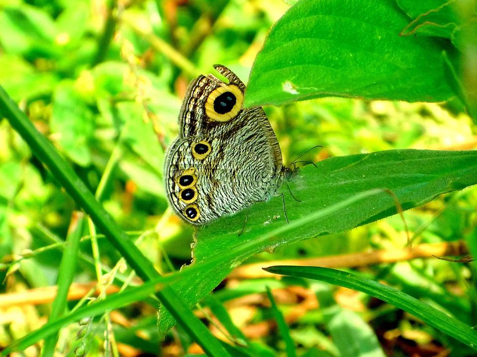 Nature, Leaf, Flora, Outdoors, Grass, Closeup, Little