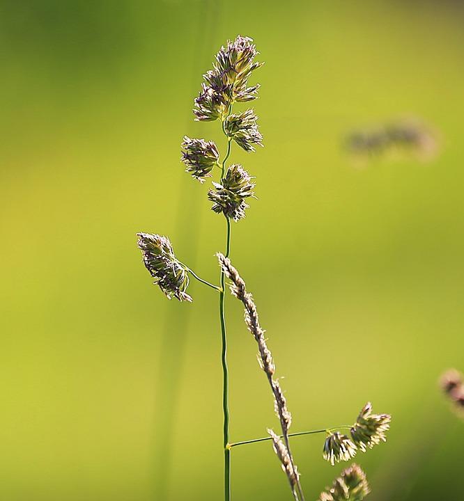 Grass, Beauty, Summer, Green, Yellow, Closeup, Macro